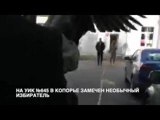 Житель Копорья проголосовал по указу своего питомца-гуся