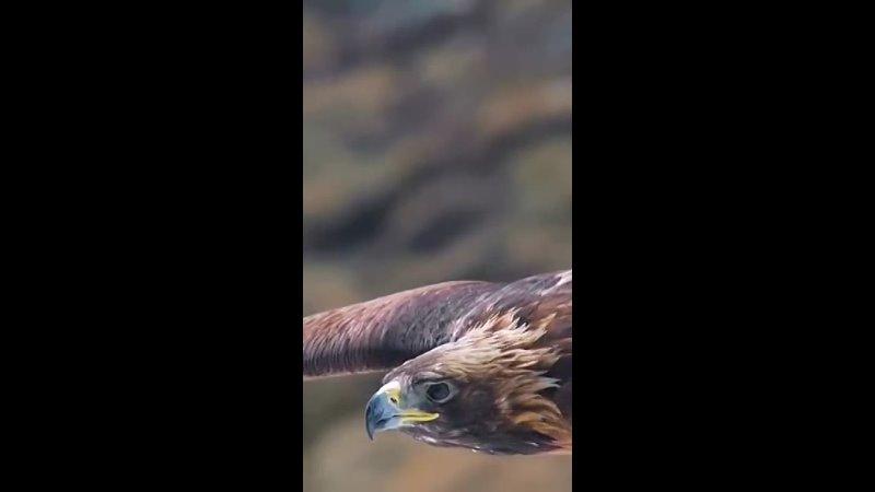 Видео от Любови Семакиной