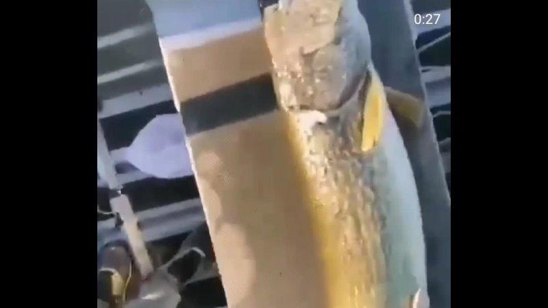 Видео от НаРеке