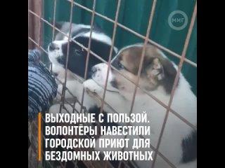 Волонтёры #GAZ_актив ООО