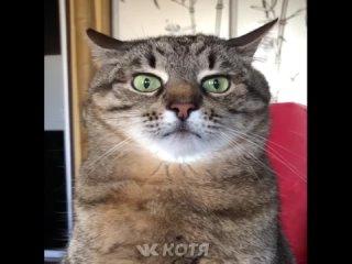 Котя - Самые милые животные #55 (кот кошка котенок кусь cat cats)