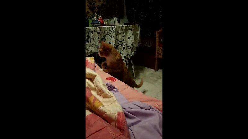 Видео от Волонтерский мини приют для кошек Мишенька