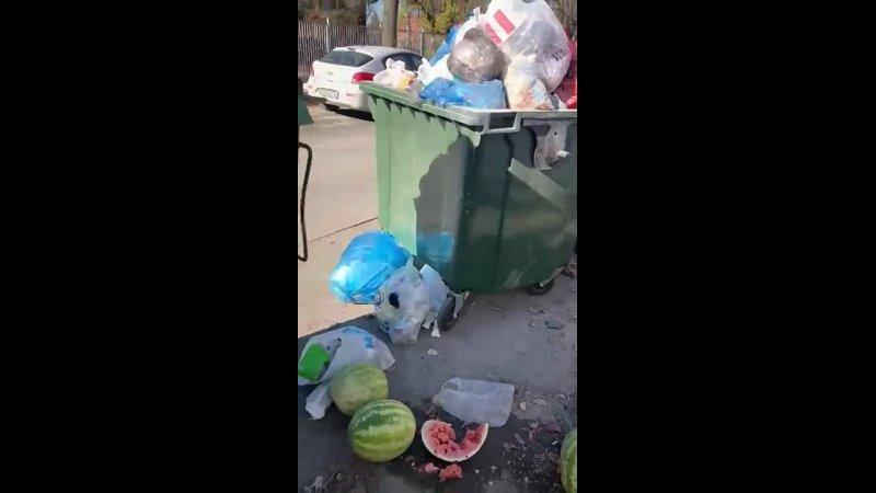 Видео от ПРИЮТ ФЕНИКС г Азов