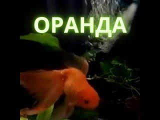 "Видео от Зоомагазин ""Муся"""