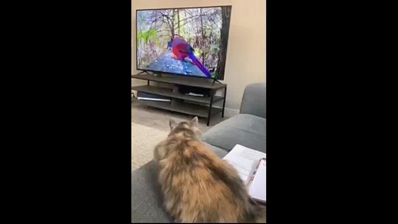 Видео от Виктора Флишкина