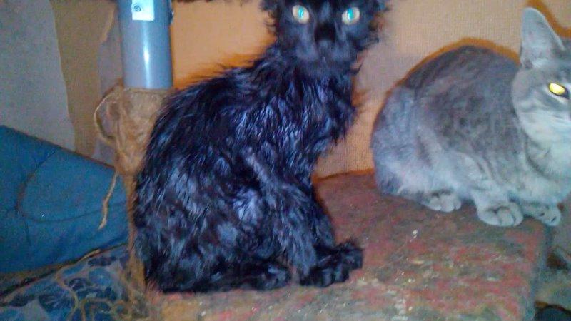 Чёрный котик Любитель мышиного клея отмыт обработан ждёт своего хозяина Желательно в доме где нет мышей