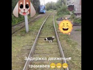 Собака задержала трамвай (включите звук)