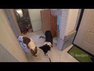"Video by Дрессировка собак ""ФанДогс"" в  СПб | Онлайн"