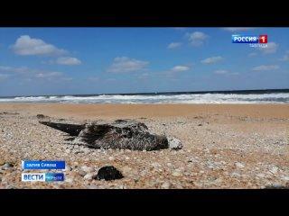Около 8 тысяч птиц погибли у залива Сиваш в Крыму