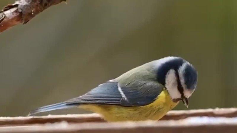 Птицы Краснодарского края