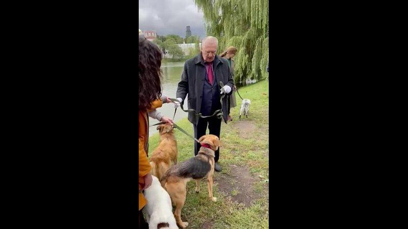 Видео от Лесной приют Фонд помощи бездомным животным