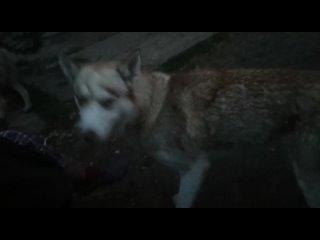 Видео от Мое собачье дело_Калуга
