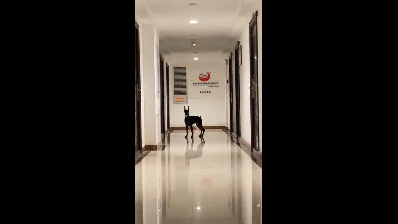 Видео от Островок юмора