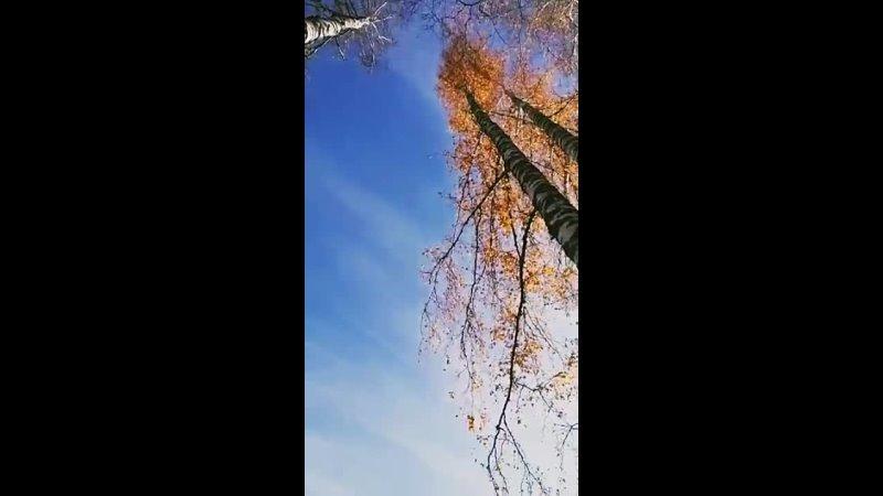 Видео от Святозары Точной