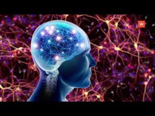 Нейронные связи - именно они делают нас такими, ка...