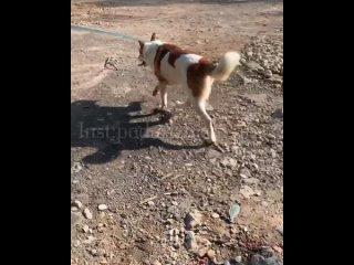 """Video by Фонд помощи бездомным животным """"ПОДАРИ ЖИЗНЬ"""""""