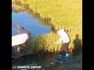 Эта технология позволяет фермерам выращивать рис на поверхности воды