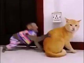 Кот vs Обезьяна.
