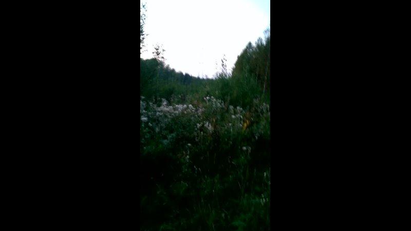 Видео от Александра Порошина