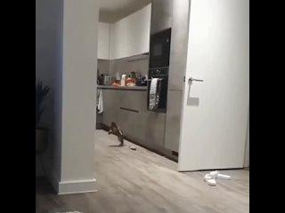 прыг скок
