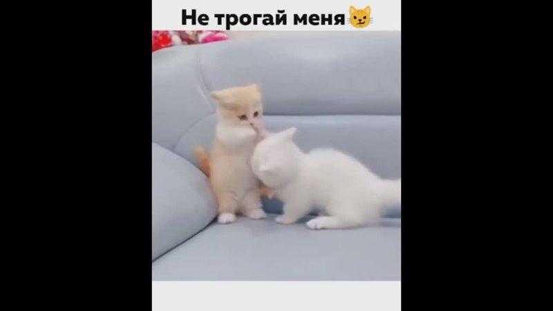 Видео от К О С Ь К А ПРИКОЛЬНЫЕ И МИЛЫЕ КОТИКИ