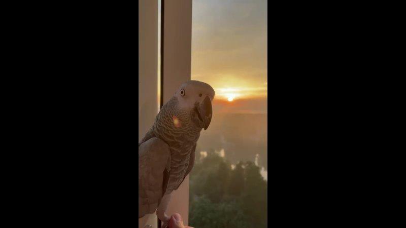Видео от Орнитолог Иван Краснов my special birds