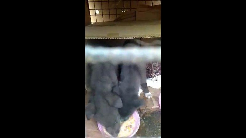 Видео от Лохматая душа центр помощи животным