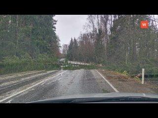 Основные последствия урагана в Ленинградской облас...