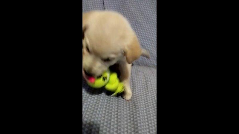 Видео от БЕРТА Приют для бездомных собак Щелковский р