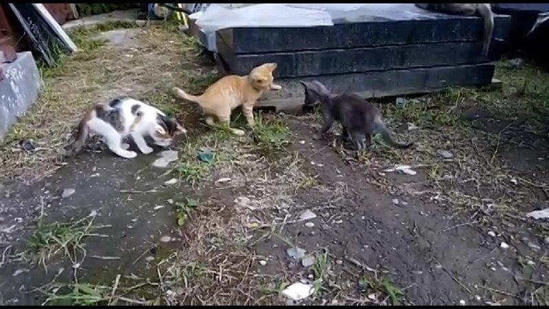 Видео от Натальи Ермаковой
