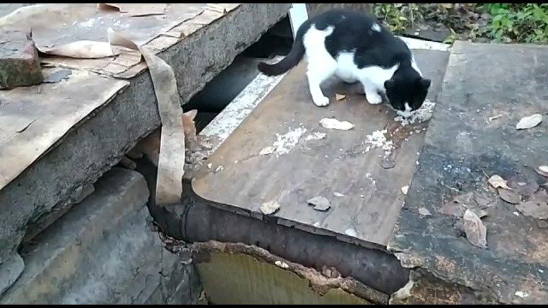 Видео от Ирины Скриповой
