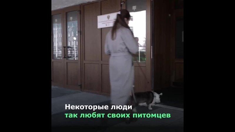 Никогда не знаешь, что тебя ждет на избирательном участке. В Красноярске голосовать пришел мужчина в образе