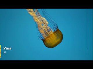 Что делать, если ужалила медуза