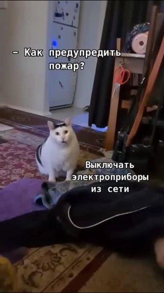 МЧС Тверской области завело аккаунт в TikTok   https://www.afanasy.biz/news/society/183503 Тверь