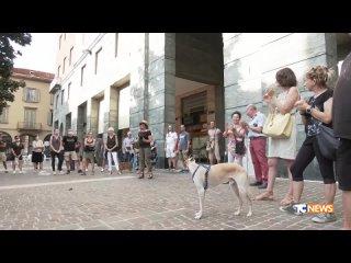Video by Giovanni Marchesini