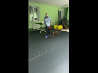 Видео от Хендлер Ярославль Антонина Ким