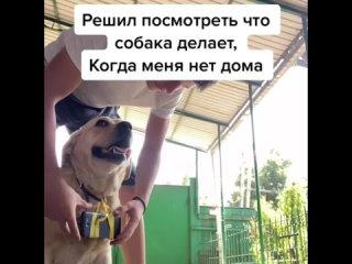 Собаку смело можно оставлять дома