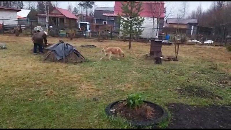 Видео от Веры Кондратовой