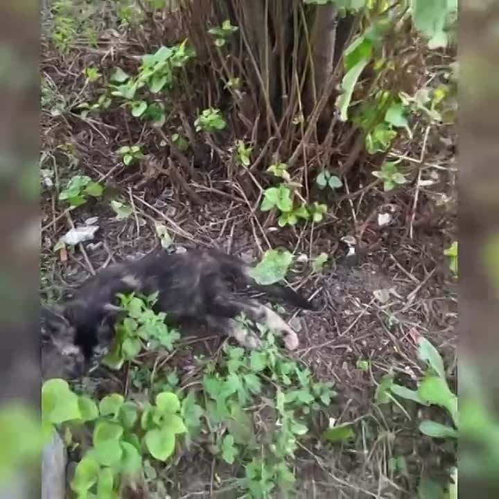 На Борисовских прудах прямо под двери ветеринарной клиники упал котенок.