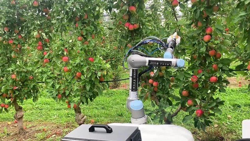 Robot Apple Harvester 3