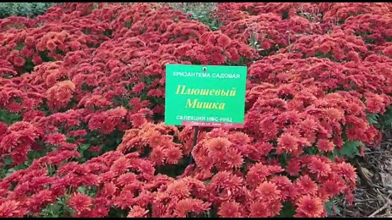 Видео от Никитский ботанический сад НБС ННЦ РАН