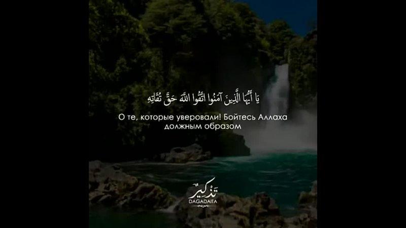 Видео от Путь пророков