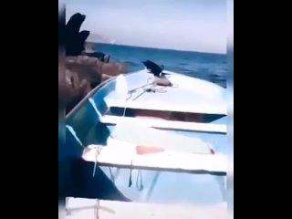 Собачка разогнала морских львов