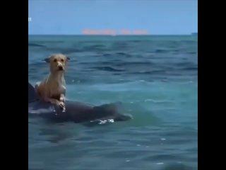 Видео от Animal world | смешные животные