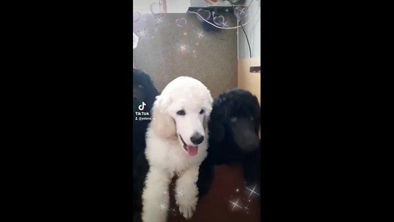 Видео от Dog World