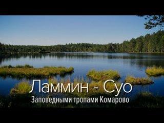 Заповедными тропами Комарово, или почему у нас дышится легко