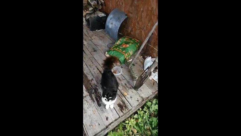 Видео от Шек Ириной