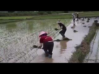 Video by Мы живём в Таиланде (Тайланд)