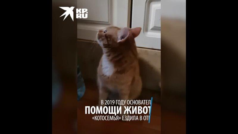 Каждый день маленькая победа волонтер из Екатеринбурга спасает кота эпилептика