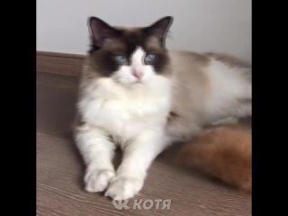 Котя - Самые милые животные #45 (кот кошка котенок кусь cat cats)